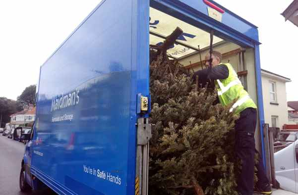 Maidmans vehicle loaded up with christmas trees