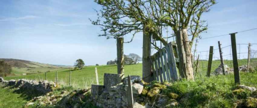 Stone Wall and tree in Dorset